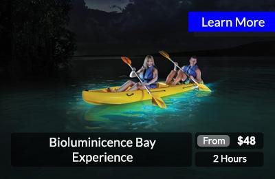 bioluminisence-bay-experience
